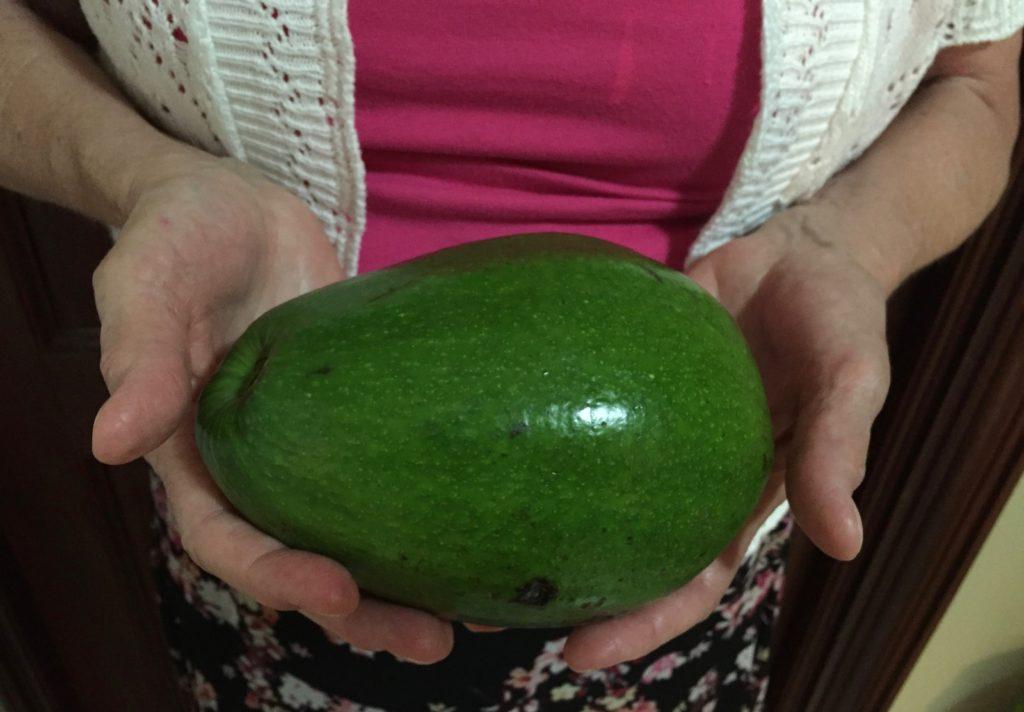 Mammoth avocado