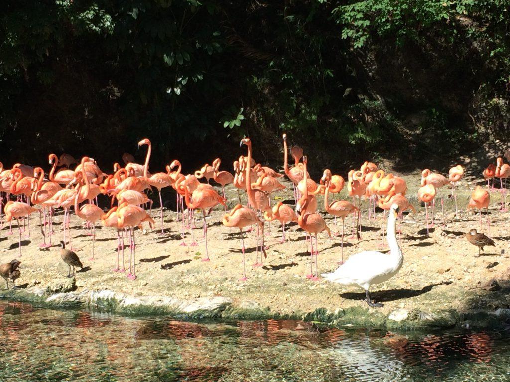 Flamingo's questions