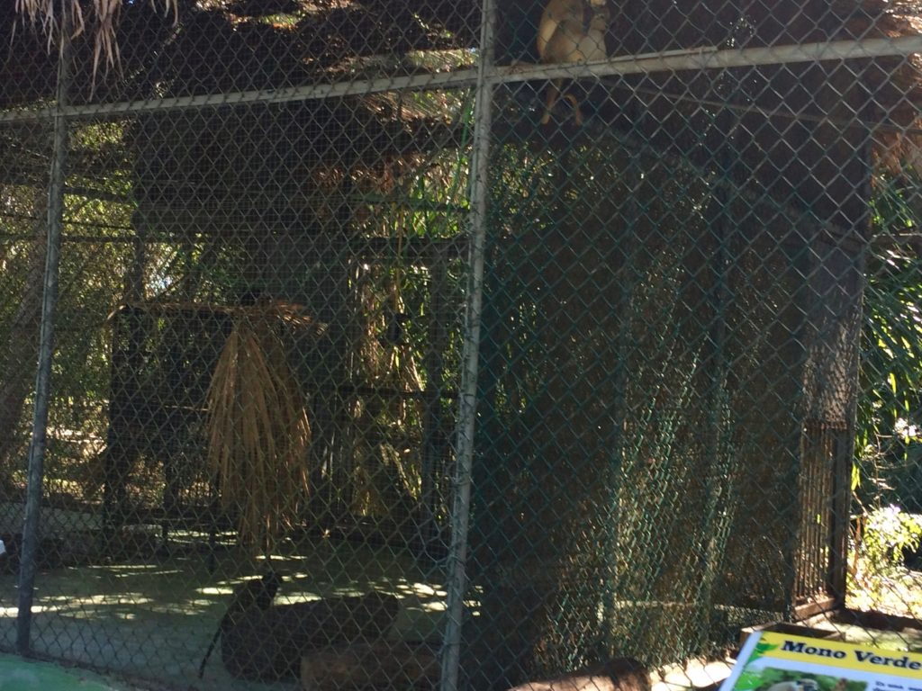 Monkey Cages