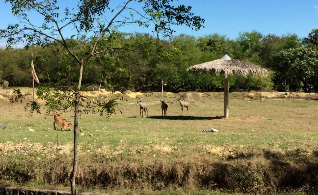 Natural habitat for large mammals