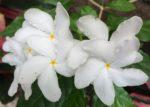 white flower square
