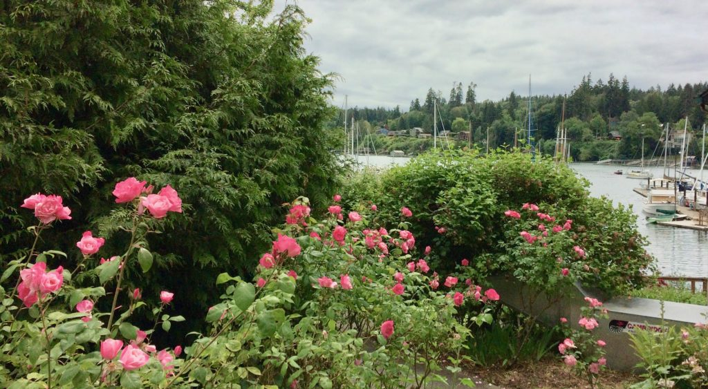 Eagle Harbor through the roses
