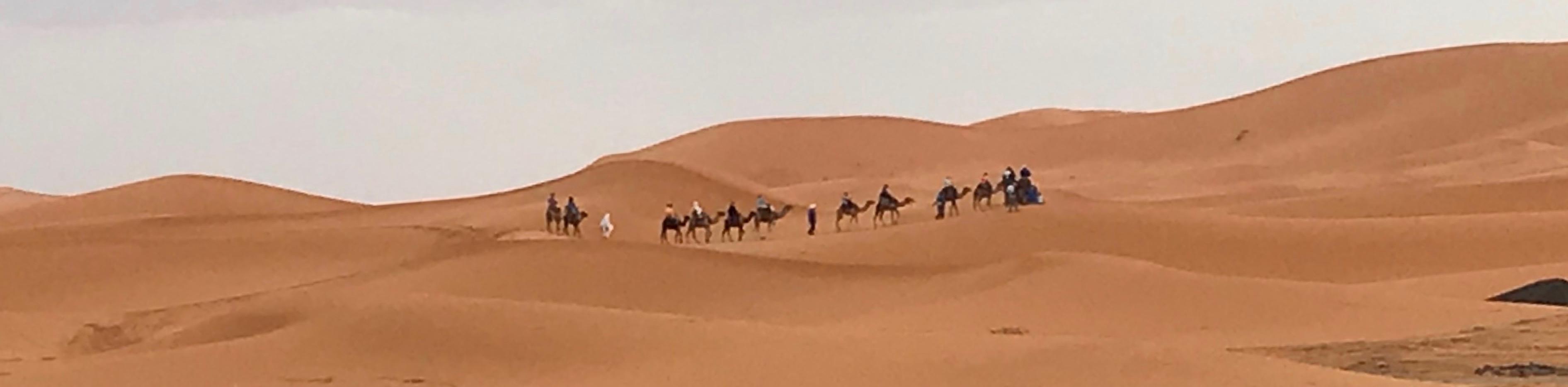 Camel train in the Moroccan Sahara
