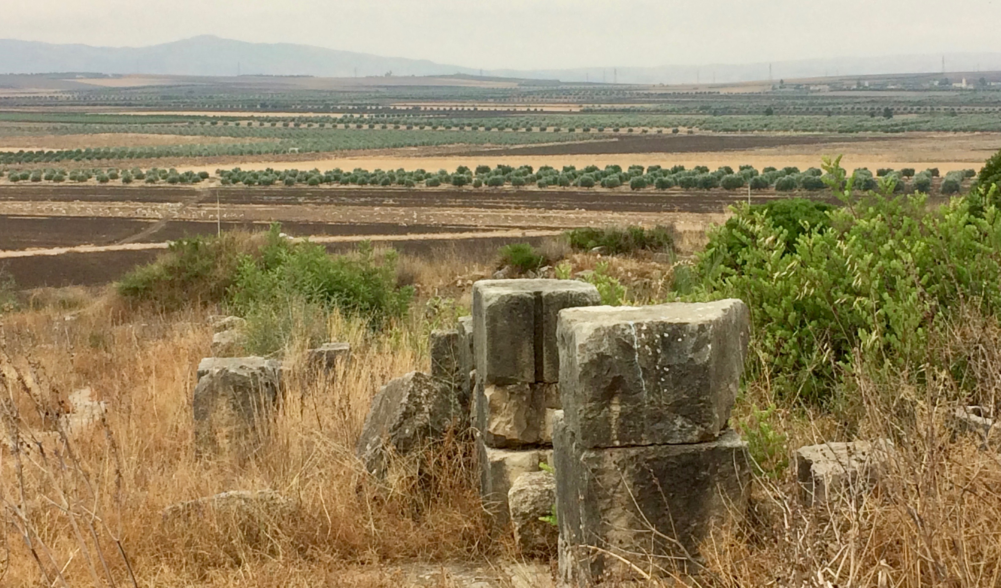 Fields below Volubilis