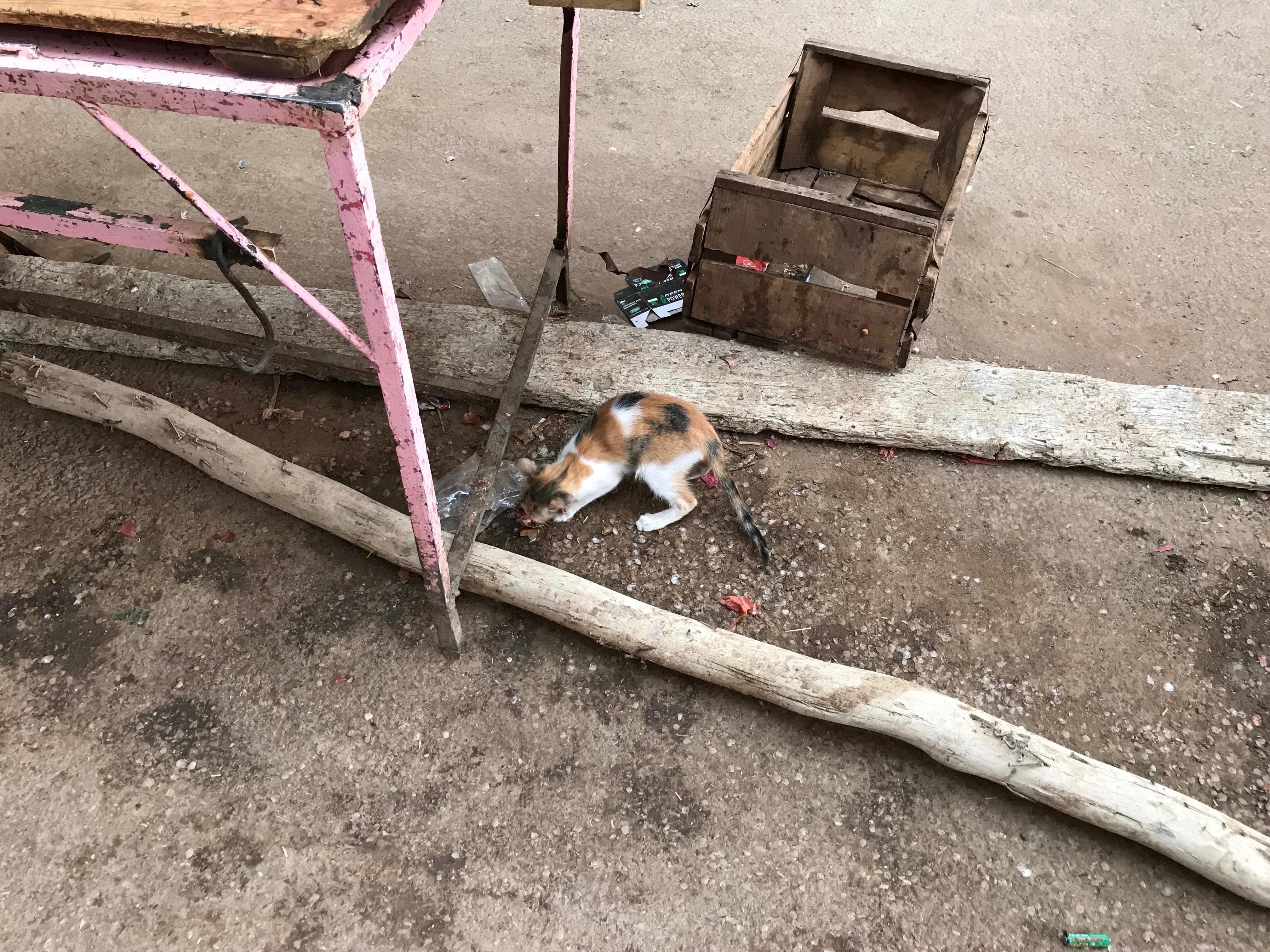Street cat in Rissani