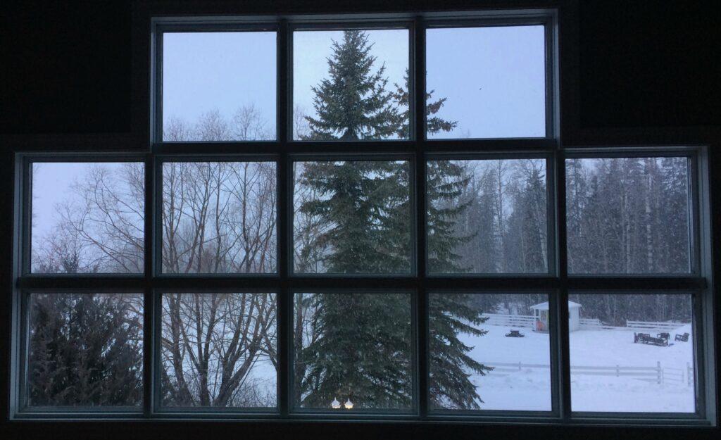 Winter view in Alberta