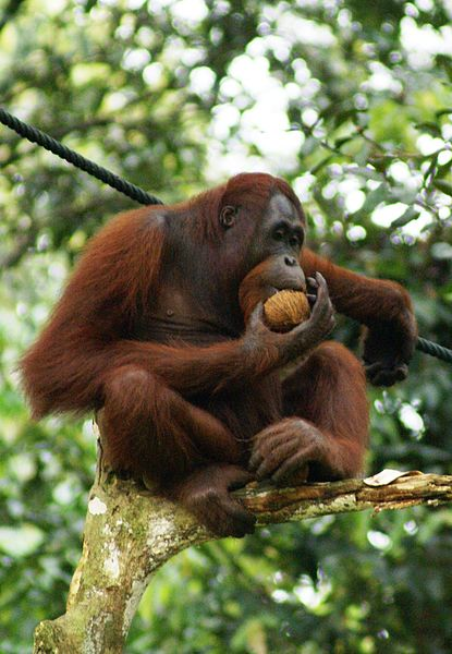 Becoming Sustainable - Other Side Palm Oil Debate