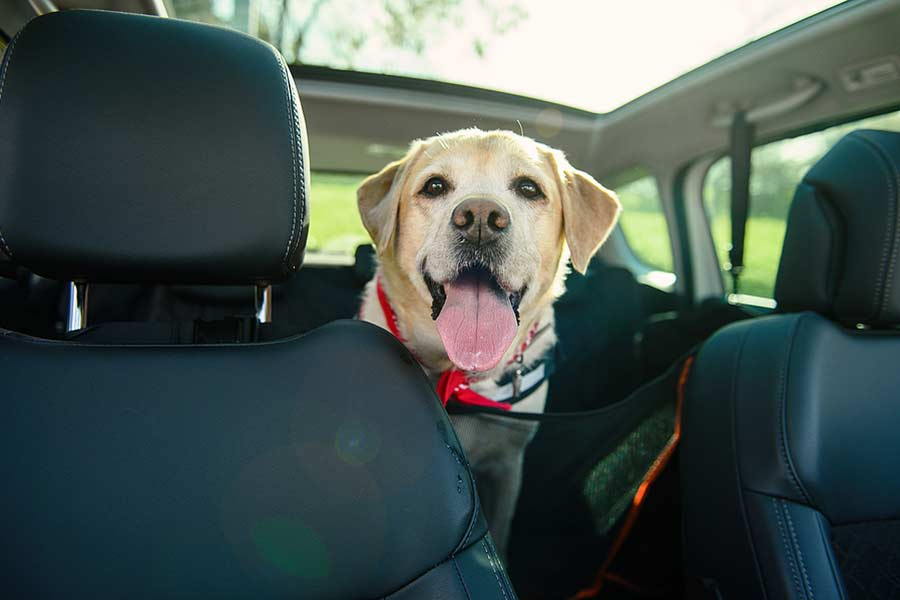 When you have a dog these are the best cars to drive.