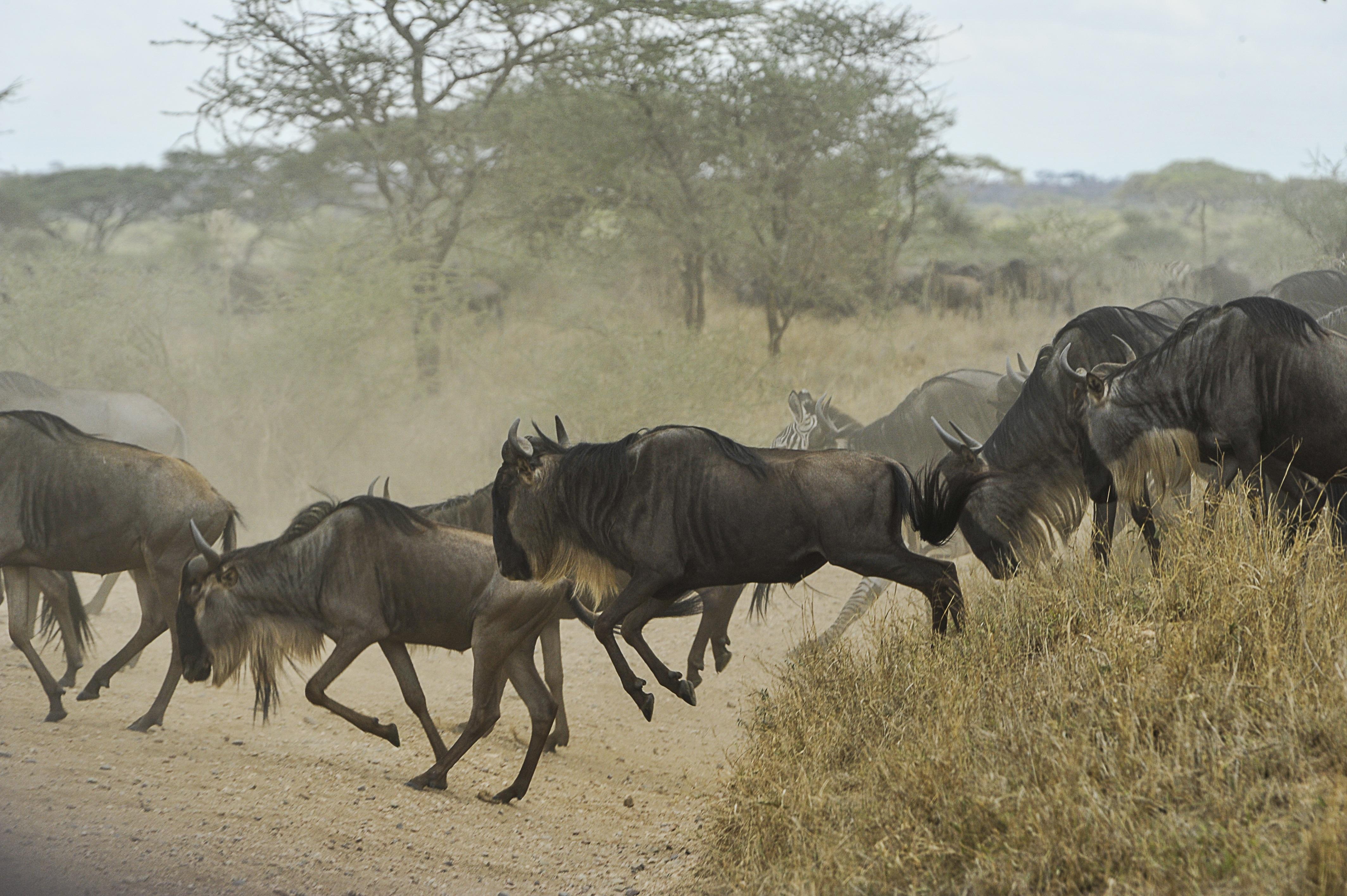Kenya & Tanzania Under Canvas with Chris Stamper