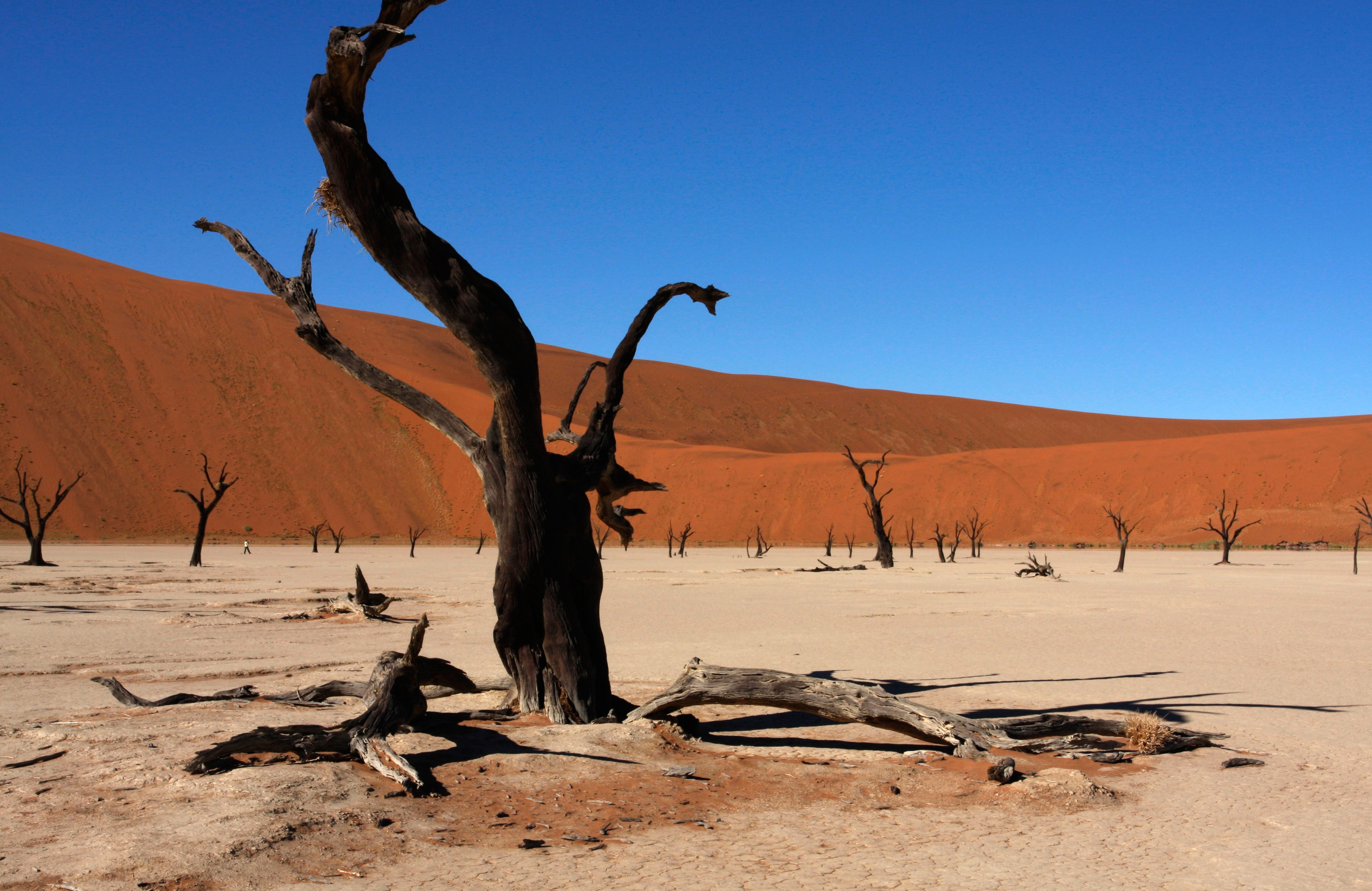 Namibia 'Our Way' Fly & Drive Safari with Nadia Eckhardt