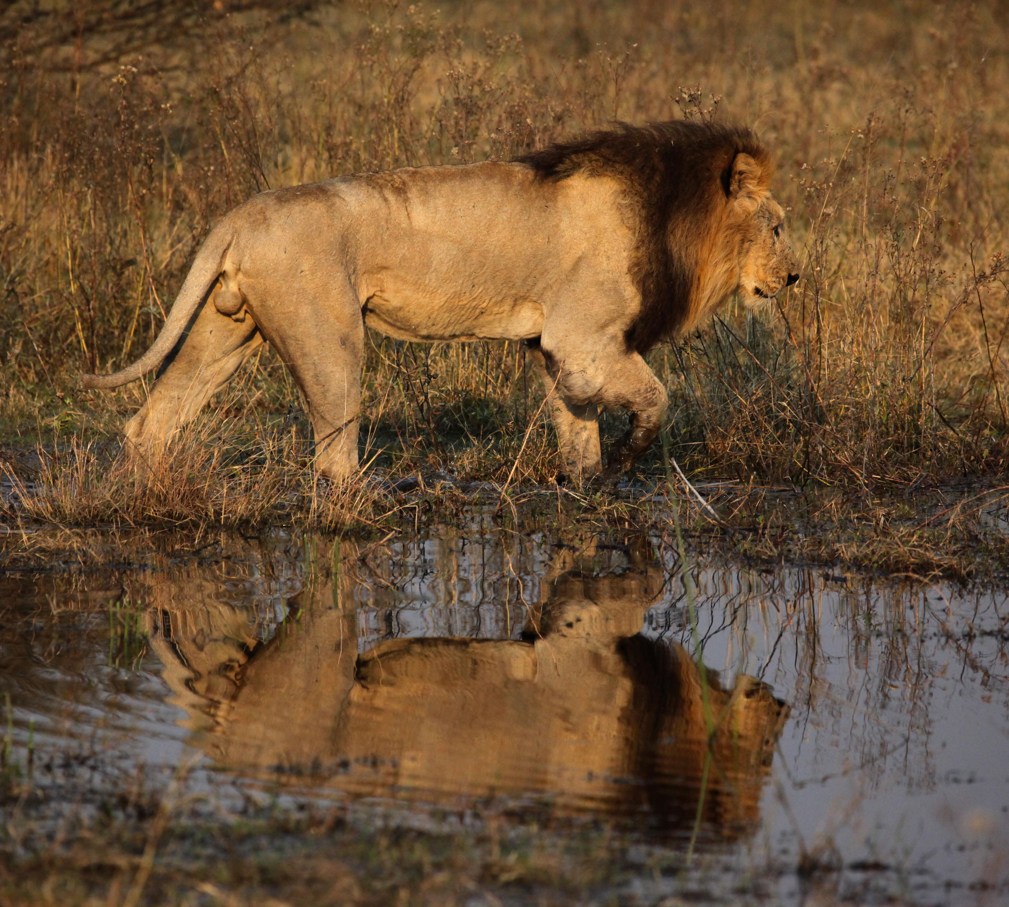 Tanzania Drive Migration Safari