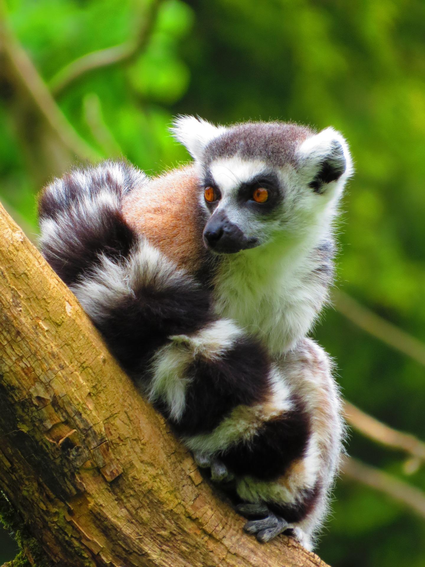 Discover Madagascar with Kenny Carlino & Nadia Eckhardt
