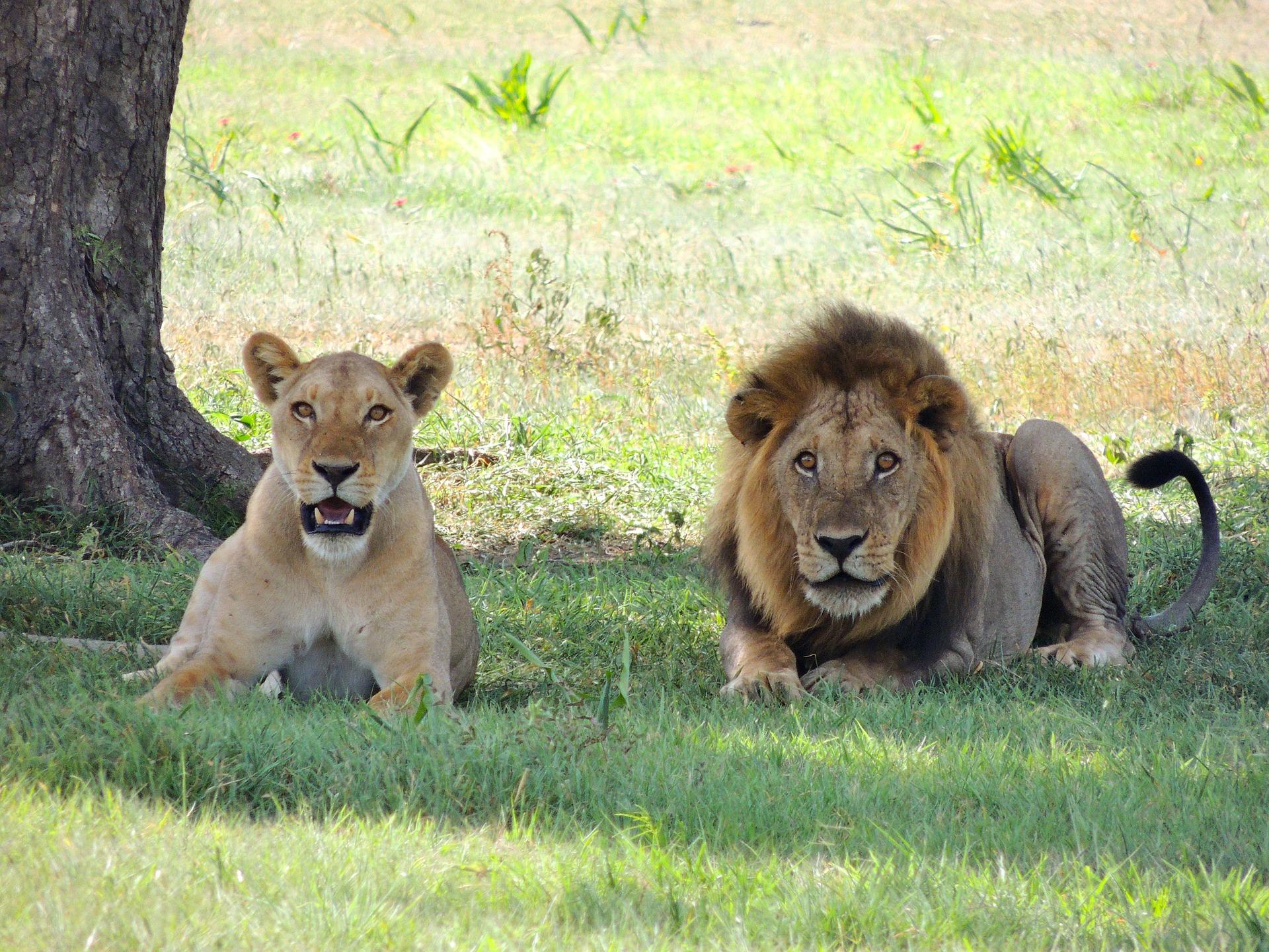 Classic Kenya & Tanzania Family Safari