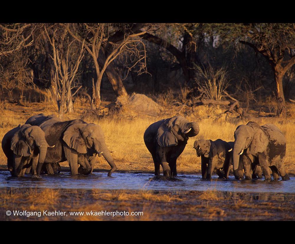 Classic Kenya, Zimbabwe & Botswana Safari