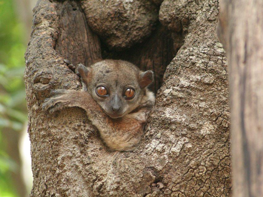 Classic North Madagascar