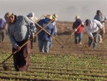 immigrant-farm-workers-2