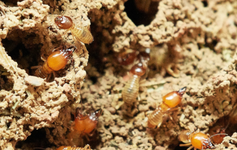 How to Identify Termite Damage.