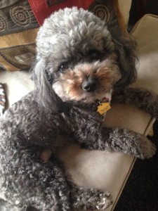 My Dog Sadie