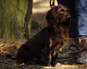 Gundog training Kent