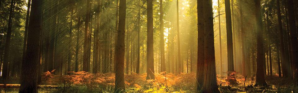tree-light-slide