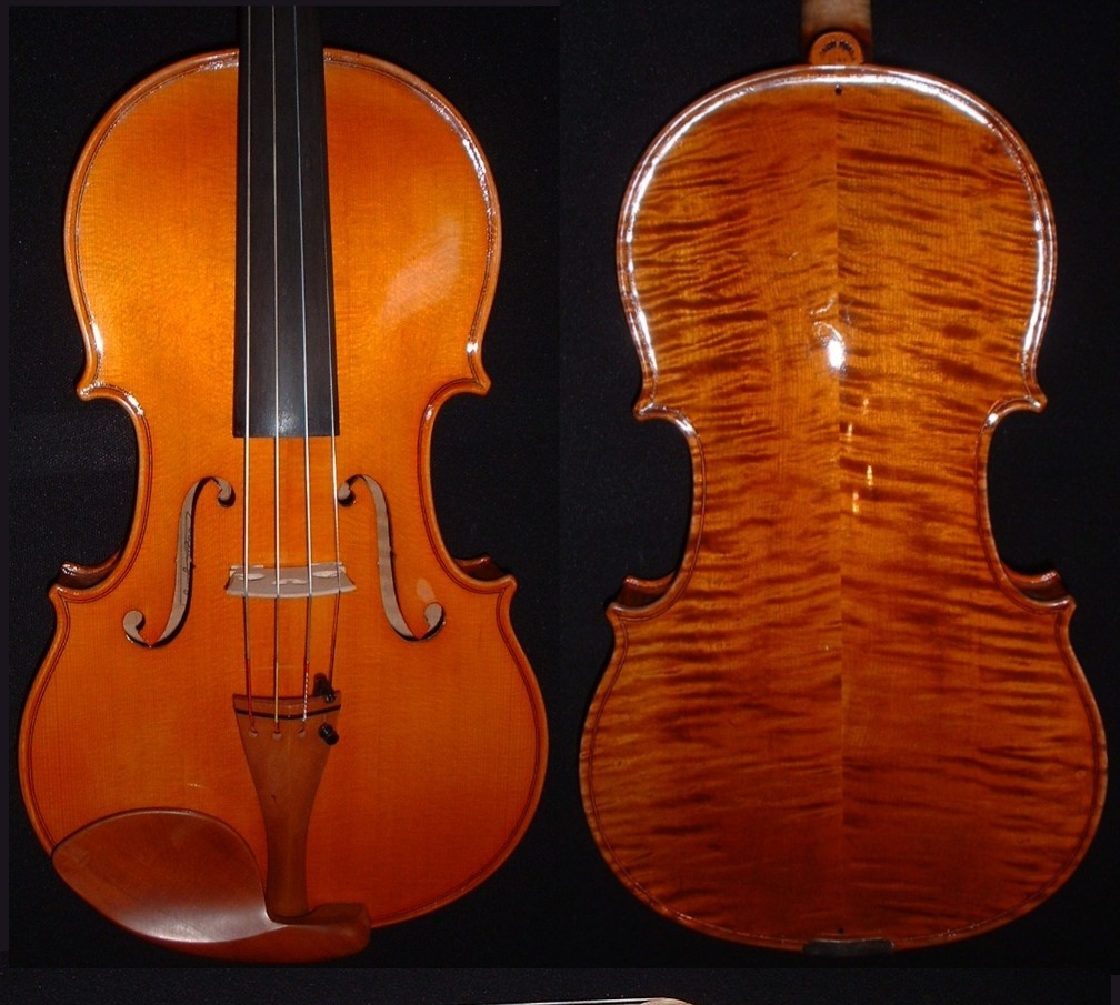 Corsini viola