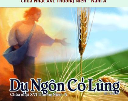Suy Niệm - Chúa Nhật 16 Thường Niên - July 19 - Năm A - Daily Mass Thánh Lễ Online