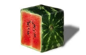 hybrid watermelon