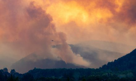 Pigeon Valley Fire Probe: Perfect Storm Led to NZ's Biggest Wildfire in 72 Years