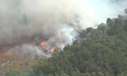 Firefighters tackling forest fire near explosives plant