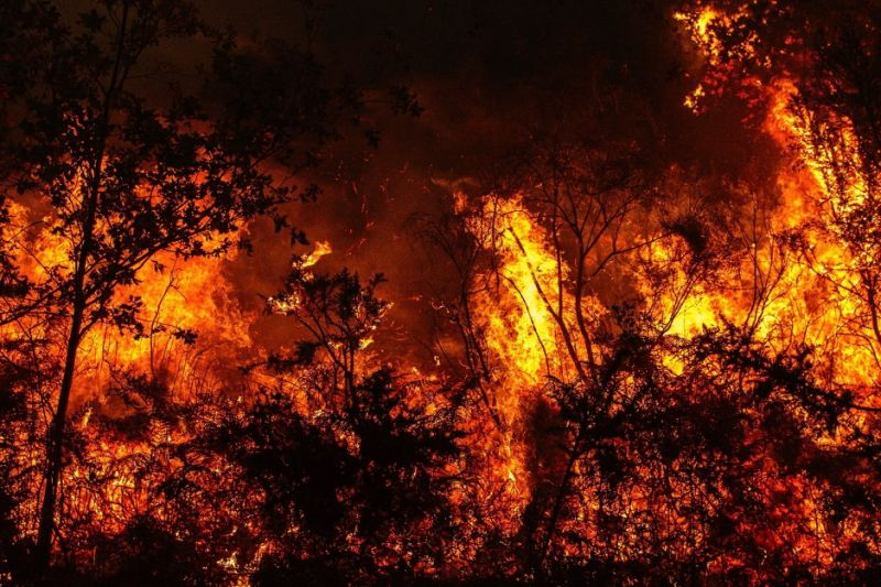 Ingenious wildfire monitoring system is powered by the swaying of trees