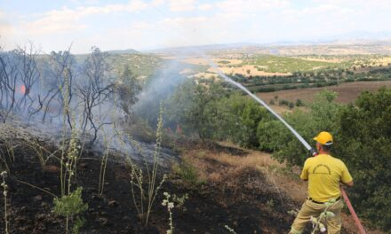 Turkey aims for under 10-minute response time to forest fires