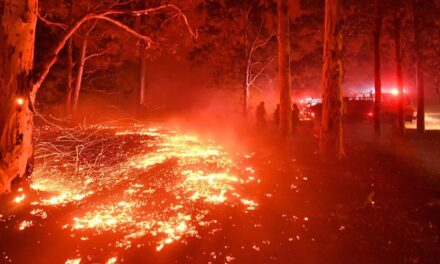 Australian bushfires likely to happen again — and they could be even worse, inquiry warns