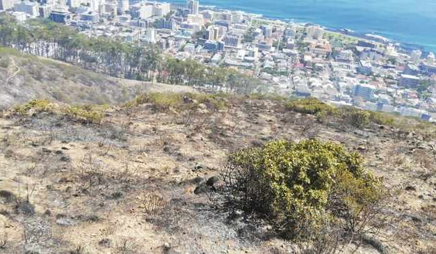 Helicopter helps Cape firefighters contain Signal Hill fire, but watching for flare-ups