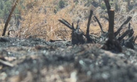 Aircraft reseeding thousands of acres over Pine Gulch burn scar area