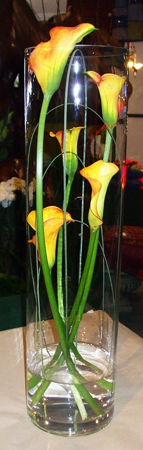 Arrum Lilies in tall cylinder vase