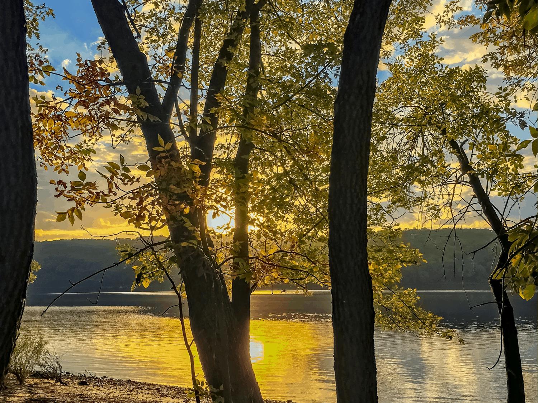 Beach Tree v3