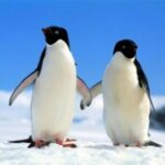 couples counseling penguin pic