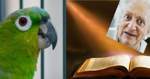 Grandma parrot bible