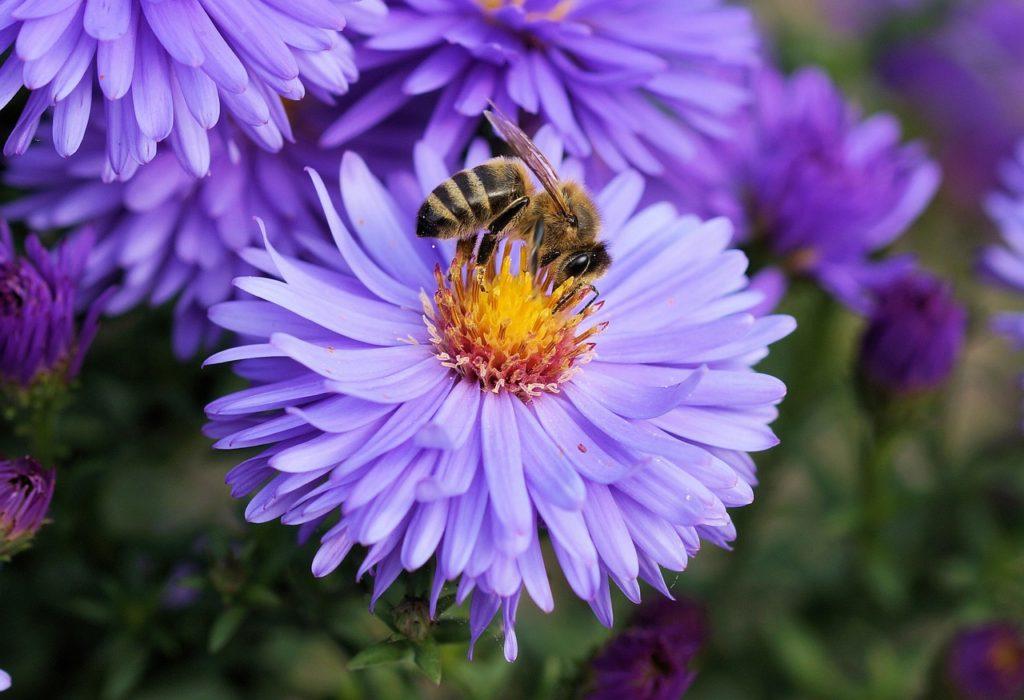 bee sitting on purple flower