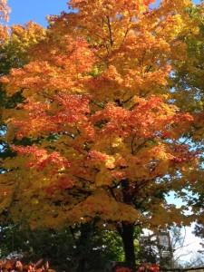 Door County Fall Events