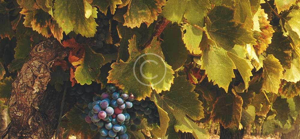 A license farm winery produce wines on site