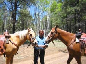 amaro-horses