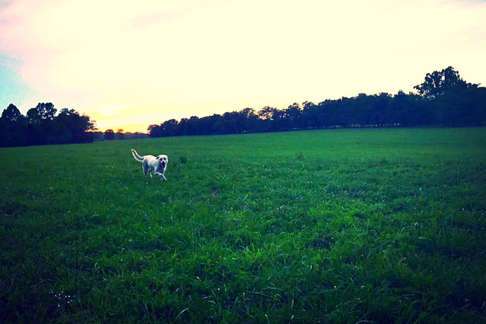 Ole Lilly in the pasture