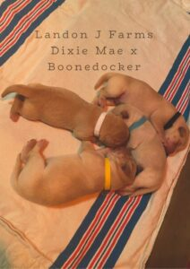Dixie and Boone's Babies!