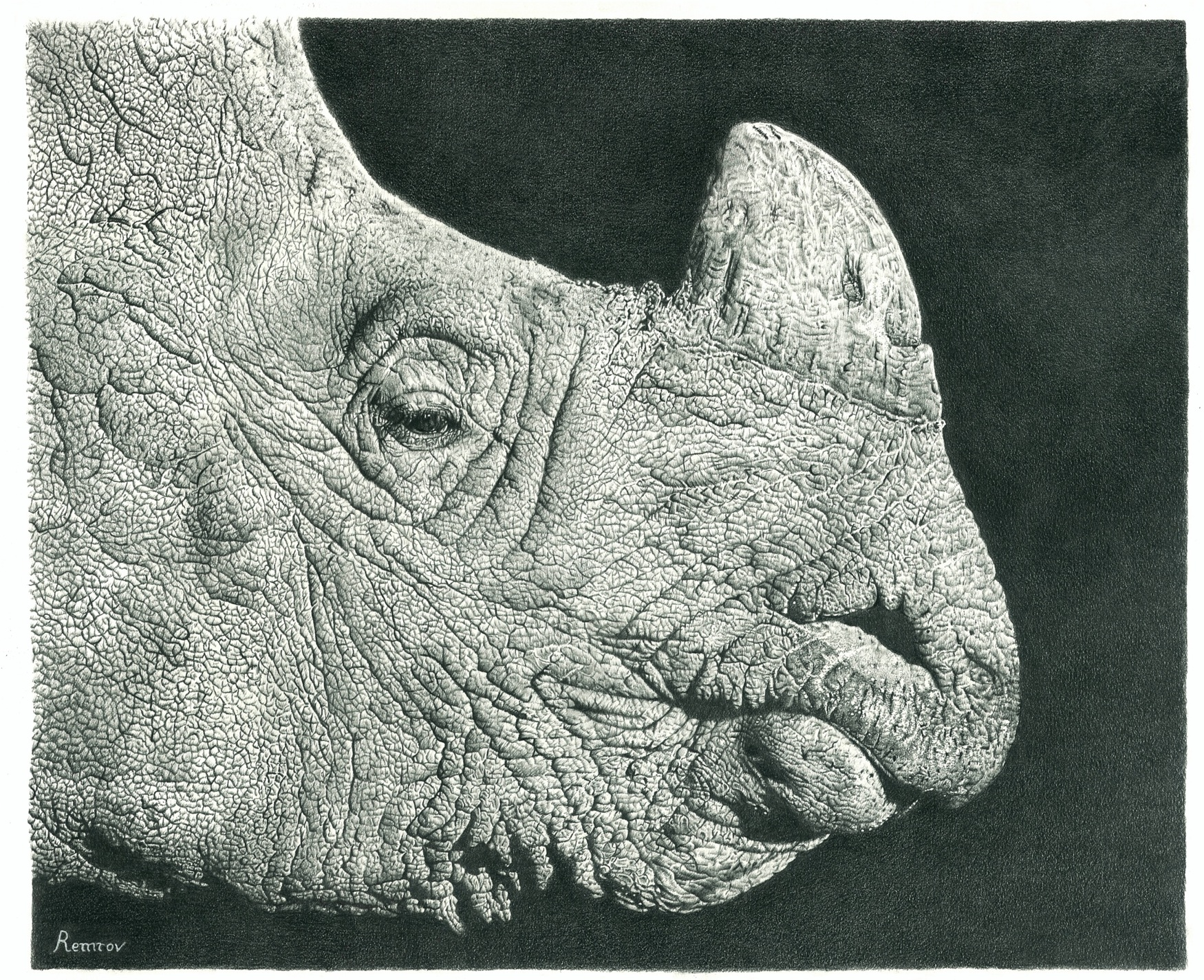 Rhino Pencil Drawing by Remrov