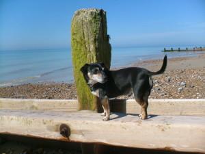 Dog on sea defence