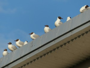 seagulls waiting