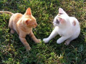 kittens play fighting