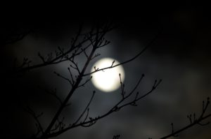 moon against a branch