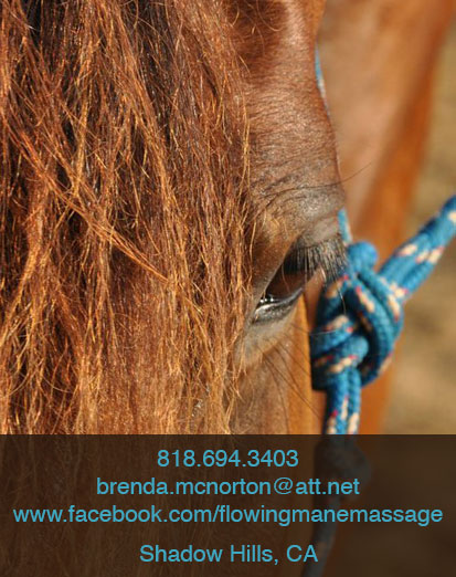 Flowing-Mane-Contact-Page